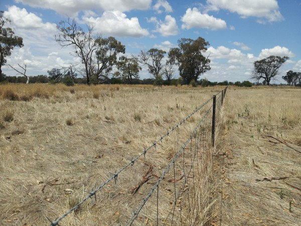 Potential wetland site for the 2014/15 Investment Program, Lowesdale area - proposed works include the removal of fencing and revegetation