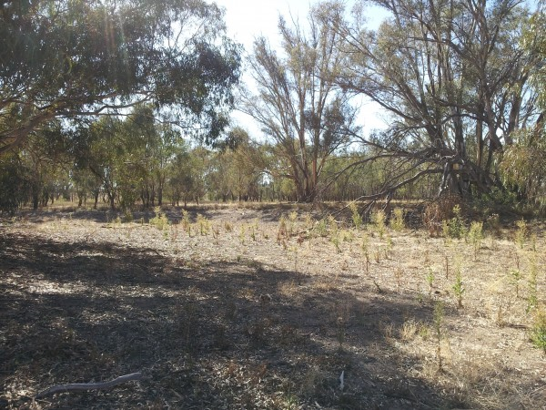 Potential wetland site for the 2014/15 Investment Program, Rand area – proposed works include fencing, grazing management and revegetation