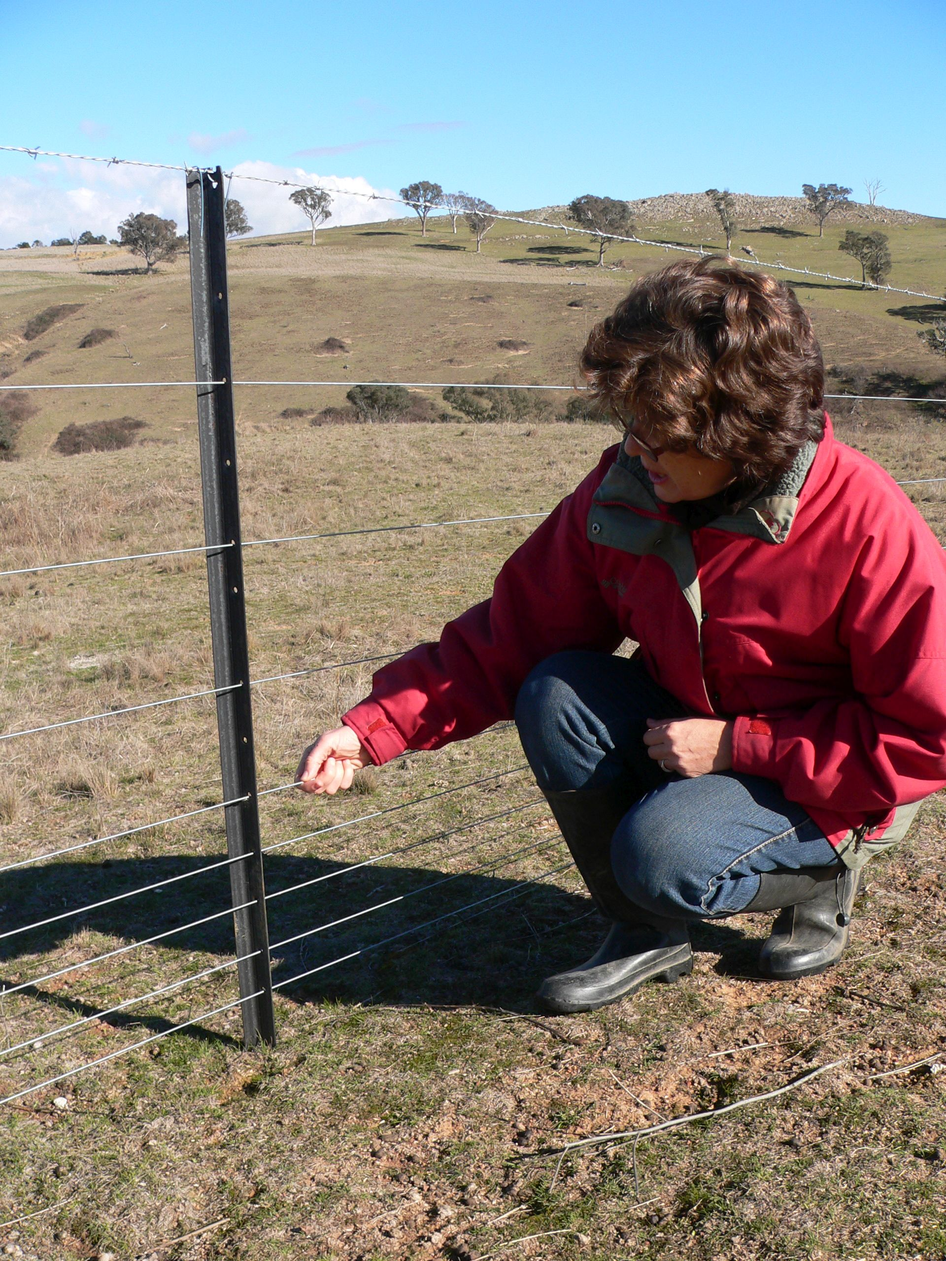 Fencing is being used to protect vulnerable areas as they rehabilitate. Photo Kylie Nicholls.