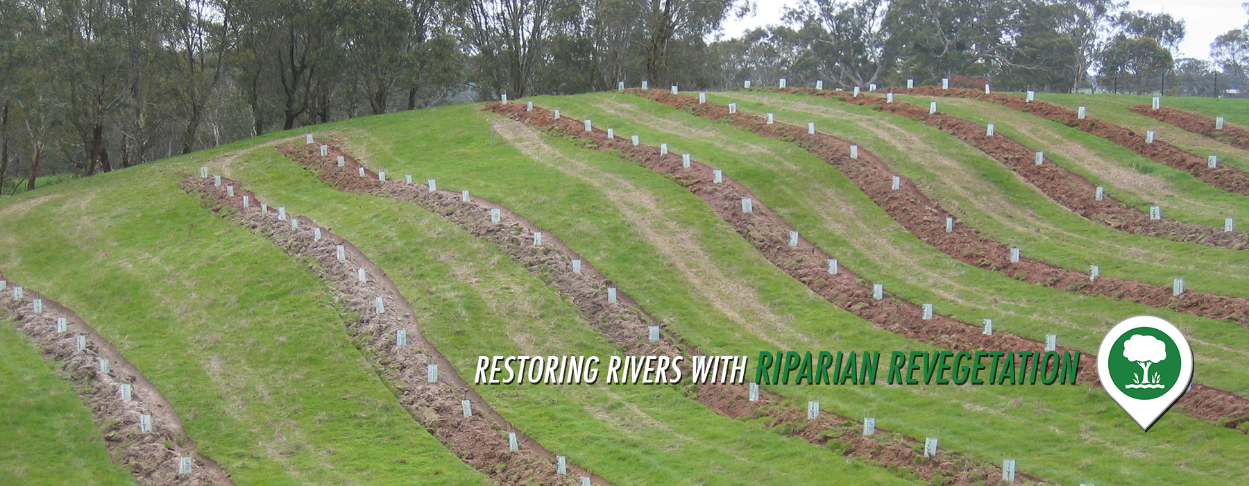 RS-riparian-revegetation-slider-v2