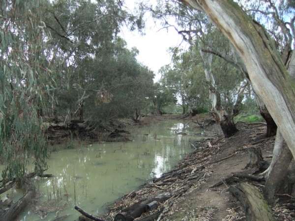The Speewa Creek has benefited from environmental watering. Photo S Healy OEH.