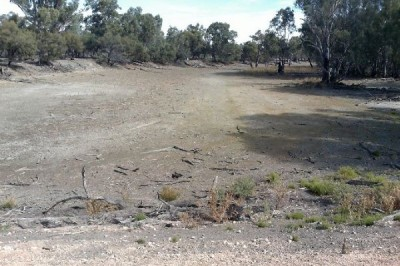 Backwater Lagoon, looking south to the Murray River