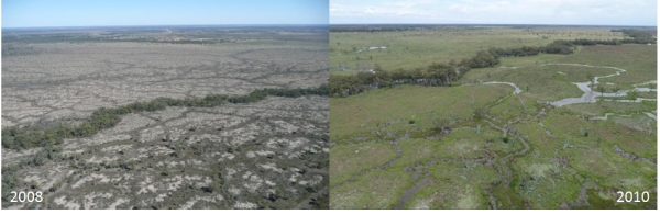 Southern Marshes 2008 vs 2010
